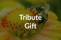Donate Now - Tribute